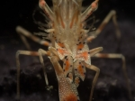 tiger-shrimp-divers-lodge-lembeh