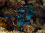 REISE / NORD SULAWESI / Lembeh Strait / ROTH