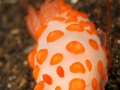 nudi-divers-lodge-lembeh-10