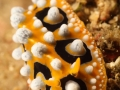 nudi-divers-lodge-lembeh-13