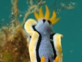 nudi-divers-lodge-lembeh-16