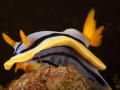 nudi-divers-lodge-lembeh-23