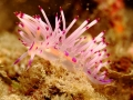 nudi-divers-lodge-lembeh-3