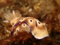 nudi-divers-lodge-lembeh-7