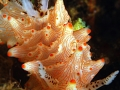 nudibranch2