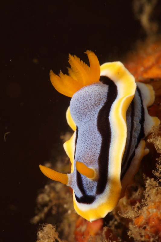 nudi-divers-lodge-lembeh-29