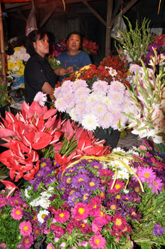 Fresh flower in Tomohon market