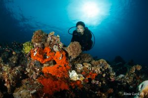 Coral at Palau Dua with Divers Lodge Lembeh