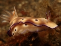 nudi-divers-lodge-lembeh-22