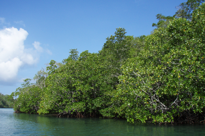Mangroves around the bay